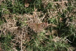 butterfly in automnal grass